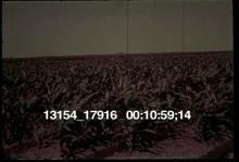 13154_17916_pollution_11.mov
