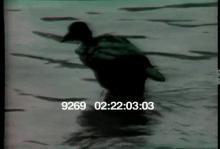 9269_bird_oil_spill.mov