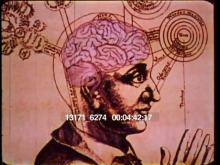 13171_6274_brain3.mov