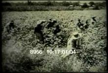8956_celluloid.mov