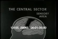 13155_28065_brain_behavior1.mov