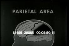 13155_28065_brain_behavior3.mov