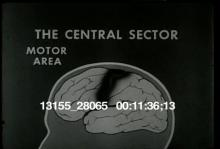 13155_28065_brain_behavior6.mov
