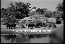 13152_30388_family_safari5.mov