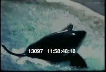 13097_aquarium.mov