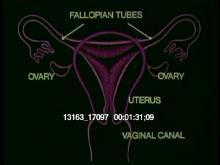 13163_17097_uterus.mov