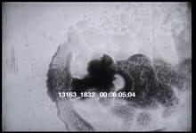 13163_1832_pasteur4.mov