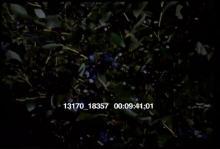 13170_18357_hunt5.mov