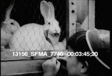 13156_SFMA_7740_animal_show.mov