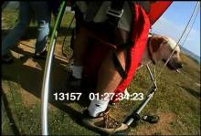 13157_hang_gliding_dog1.mov