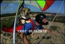 13157_hang_gliding_dog3.mov