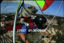 13157_hang_gliding_dog4.mov