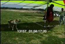 13157_hang_gliding_dog11.mov