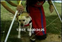 13157_hang_gliding_dog12.mov