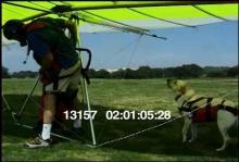 13157_hang_gliding_dog13.mov