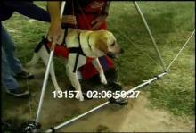 13157_hang_gliding_dog15.mov
