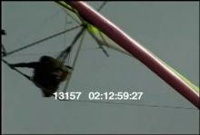 13157_hang_gliding_dog18.mov