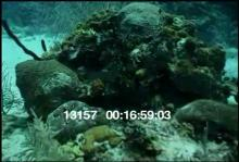 13157_scubadiving_dog6.mov