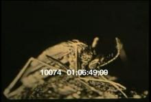 10074_mosquito_control1.mov