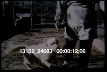 13152_24683_dog_training2.mov