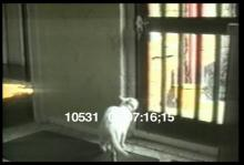 10531_animal_bloopers.mov