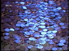 8814_gold_coins.mov