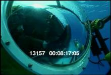 13157_scubadiving_dog3.mov