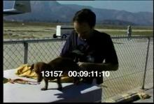 13157_skydiving_dog7.mov