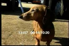 13157_skydiving_dog9.mov