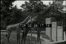 12559_animal_families2.mov