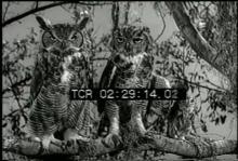 12559_animal_families3.mov
