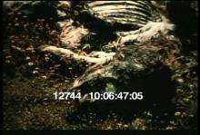 12744_fungi_penicillin.mov