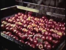 13178_17569_apples10.mov