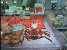 13172_10172_hakodate_market_tokyo.mov