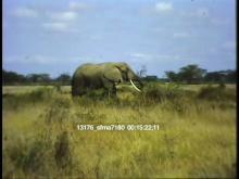 13176_sfma7180_african_safari8.mov