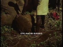 13176_sfma7180_african_safari19.mov