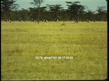 13176_sfma7163_africa_safari7.mov
