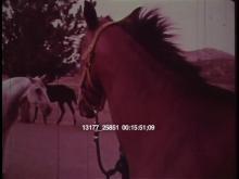 13177_25851_horses9.mov