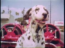13175_25999_firehouse_dog4.mov