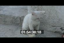 13157_turkey2_alcati_stray_cats.mov