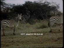 13177_sfma7212_africa_travel8.mov